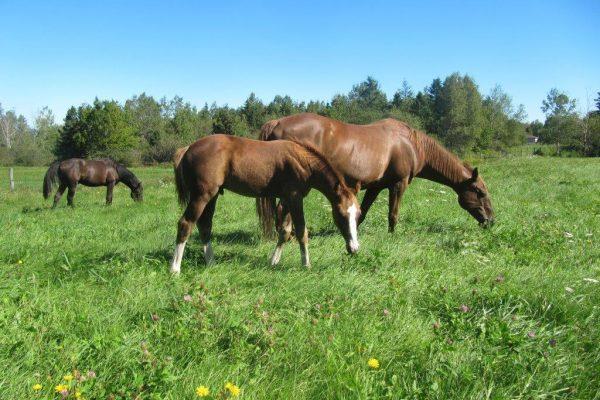Katelynns Horses