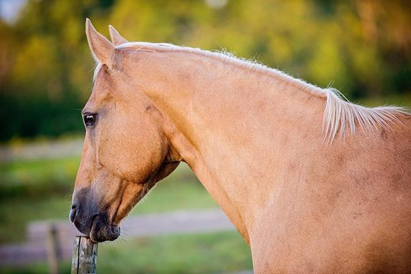Bonnie's Horse