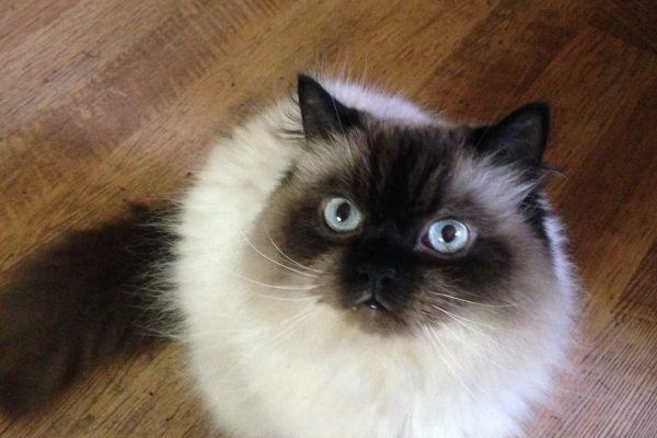 Kristin Cat