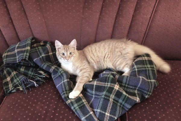Kristin Cat2